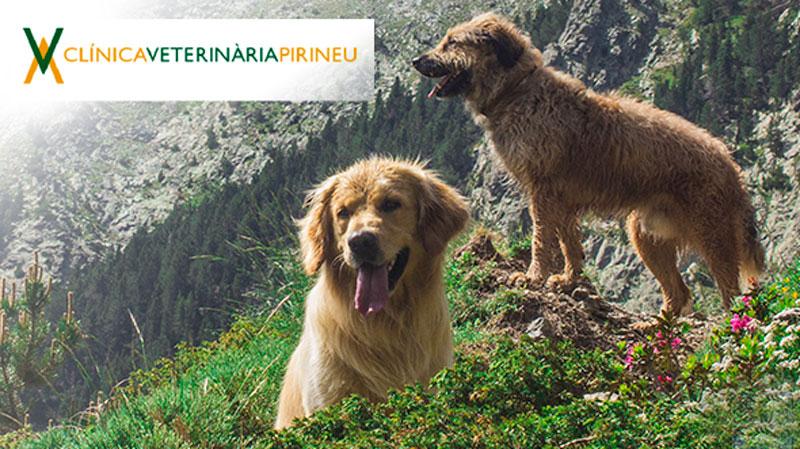 Clinica-veterinaria-pirineu