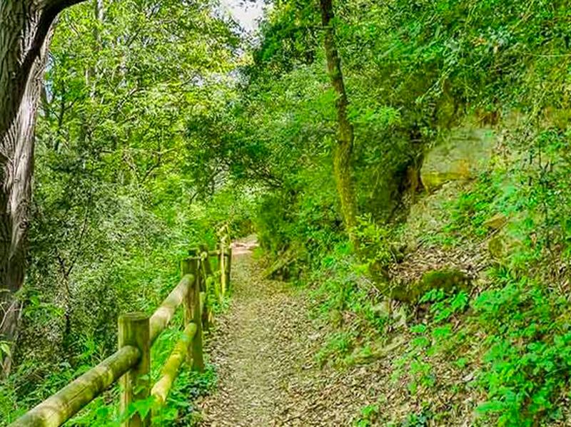 Cami-Natural-de-les-Vernedes-a-Sort03
